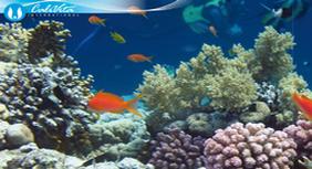 """More živi u našim stanicama."" - P. Yves Cousteau"