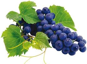 resveratol-winogrona